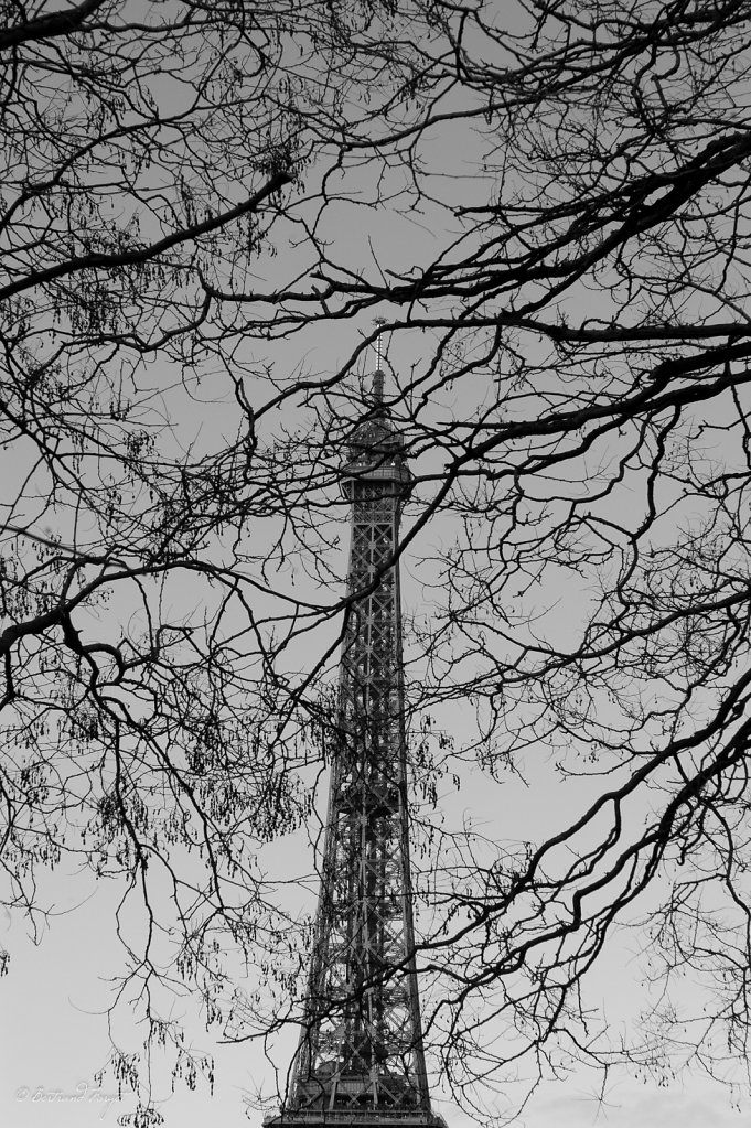 photos-paris-tour-eiffel-branche.jpg